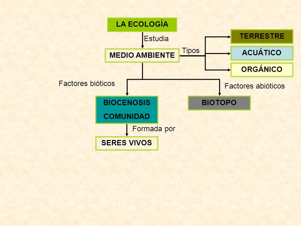 LA ECOLOGÍA MEDIO AMBIENTE Estudia ACUÁTICO TERRESTRE ORGÁNICO Tipos BIOTOPOBIOCENOSIS COMUNIDAD Factores bióticos Factores abióticos SERES VIVOS Form