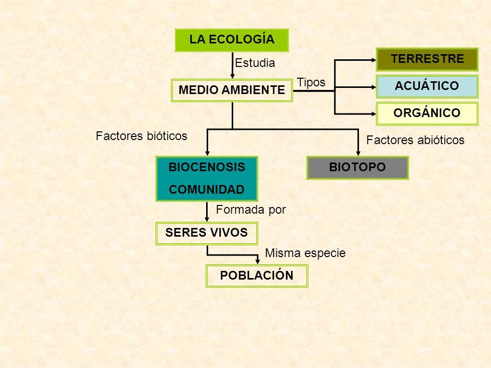 LA ECOLOGÍA MEDIO AMBIENTE Estudia ACUÁTICO TERRESTRE ORGÁNICO Tipos BIOTOPOBIOCENOSIS COMUNIDAD Factores bióticos Factores abióticos SERES VIVOS POBLACIÓN Formada por Misma especie