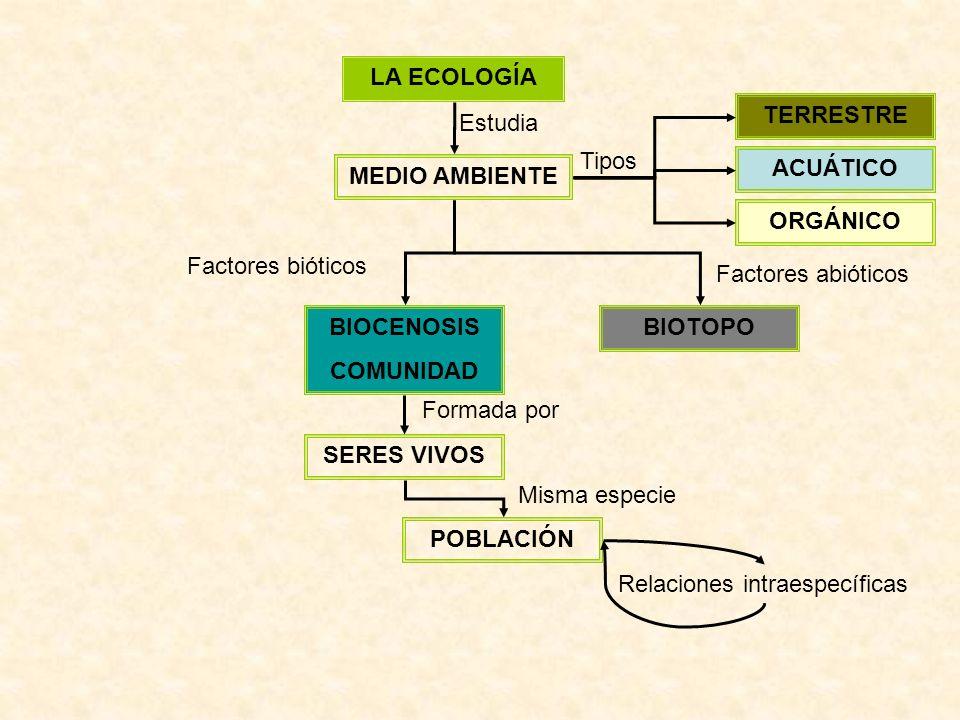 LA ECOLOGÍA MEDIO AMBIENTE Estudia ACUÁTICO TERRESTRE ORGÁNICO Tipos BIOTOPOBIOCENOSIS COMUNIDAD Factores bióticos Factores abióticos SERES VIVOS POBLACIÓN Formada por Misma especie Relaciones intraespecíficas