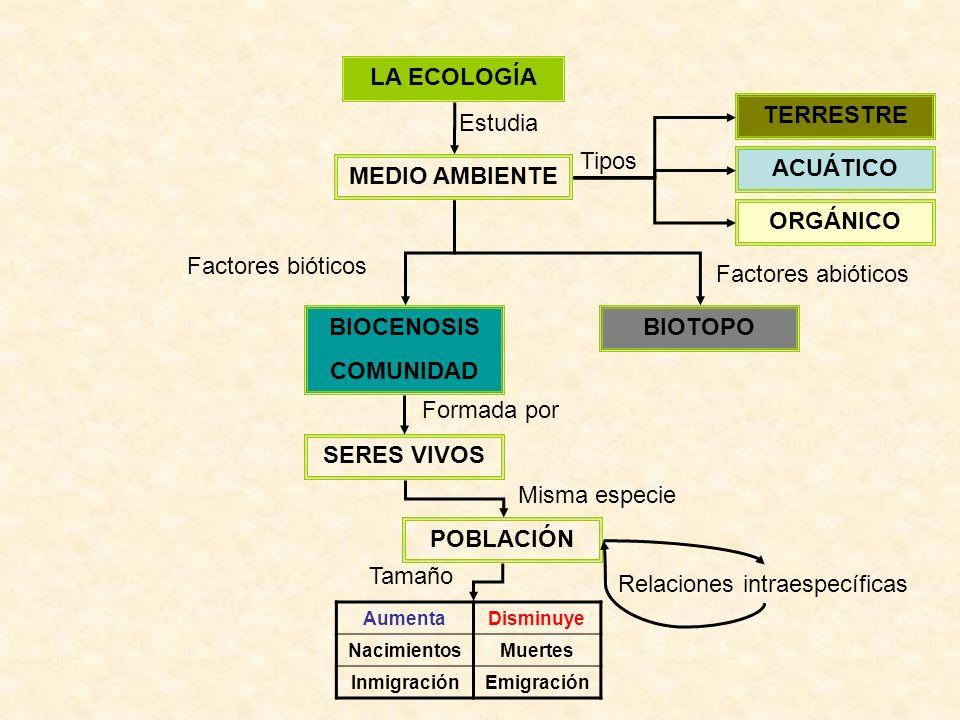 LA ECOLOGÍA MEDIO AMBIENTE Estudia ACUÁTICO TERRESTRE ORGÁNICO Tipos BIOTOPOBIOCENOSIS COMUNIDAD Factores bióticos Factores abióticos SERES VIVOS POBLACIÓN Formada por Misma especie AumentaDisminuye NacimientosMuertes InmigraciónEmigración Relaciones intraespecíficas Tamaño