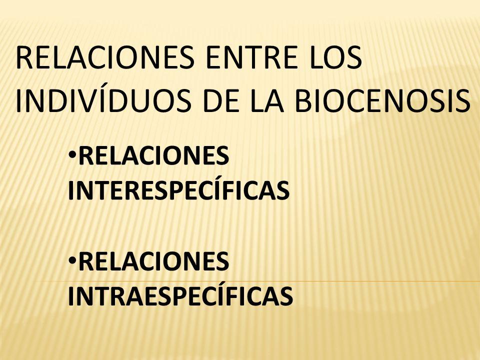 RELACIONES INTERESPECÍFICAS RELACIONES ENTRE LOS INDIVÍDUOS DE LA BIOCENOSIS RELACIONES INTRAESPECÍFICAS