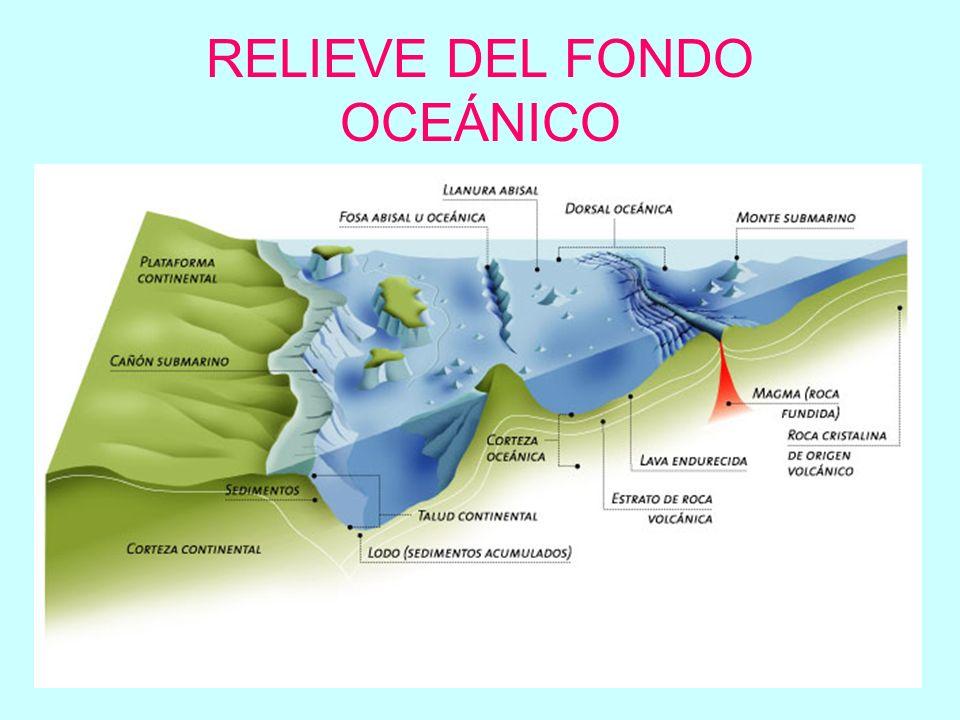 Plataforma continental: superficie con pendiente suave que se extiende desde la línea de costa hasta los 200m de profundidad Talud continental: verdadero margen del continente con fuerte pendiente.