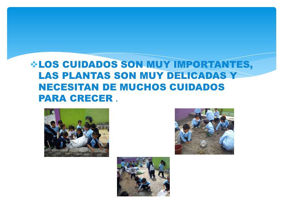 LOS CUIDADOS SON MUY IMPORTANTES, LAS PLANTAS SON MUY DELICADAS Y NECESITAN DE MUCHOS CUIDADOS PARA CRECER.