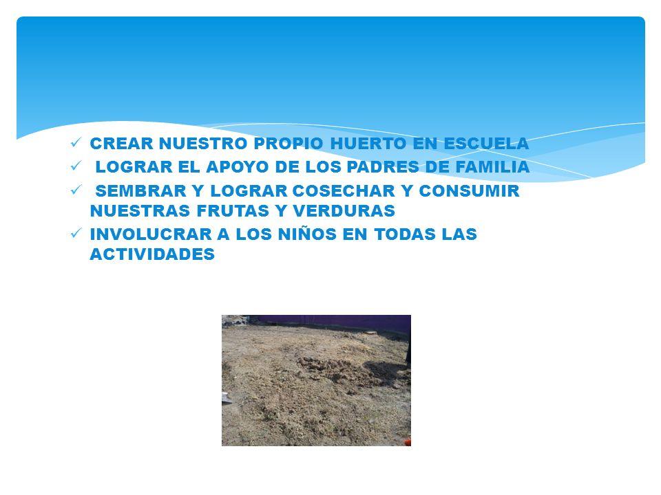 CREAR NUESTRO PROPIO HUERTO EN ESCUELA LOGRAR EL APOYO DE LOS PADRES DE FAMILIA SEMBRAR Y LOGRAR COSECHAR Y CONSUMIR NUESTRAS FRUTAS Y VERDURAS INVOLUCRAR A LOS NIÑOS EN TODAS LAS ACTIVIDADES
