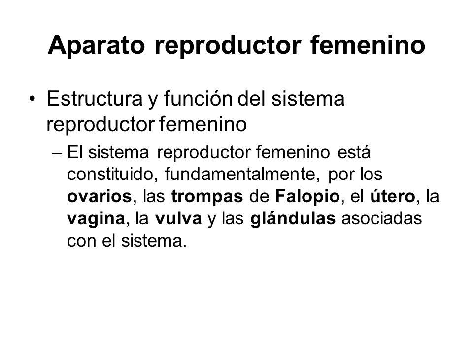 Aparato reproductor femenino Estructura y función del sistema reproductor femenino –El sistema reproductor femenino está constituido, fundamentalmente, por los ovarios, las trompas de Falopio, el útero, la vagina, la vulva y las glándulas asociadas con el sistema.