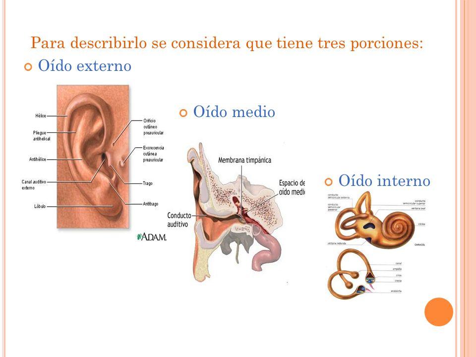 Para describirlo se considera que tiene tres porciones: Oído externo Oído medio Oído interno