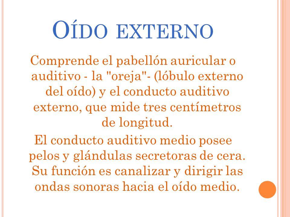 O ÍDO EXTERNO Comprende el pabellón auricular o auditivo - la