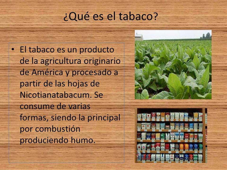 El tabaco es un producto de la agricultura originario de América y procesado a partir de las hojas de Nicotianatabacum. Se consume de varias formas, s