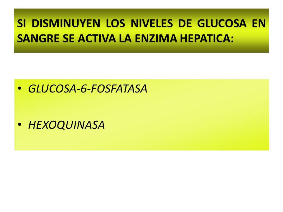 SI DISMINUYEN LOS NIVELES DE GLUCOSA EN SANGRE SE ACTIVA LA ENZIMA HEPATICA: GLUCOSA-6-FOSFATASA HEXOQUINASA