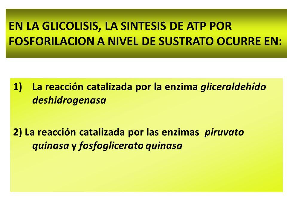 EN LA GLICOLISIS, LA SINTESIS DE ATP POR FOSFORILACION A NIVEL DE SUSTRATO OCURRE EN: 1)La reacción catalizada por la enzima gliceraldehído deshidrogenasa 2) La reacción catalizada por las enzimas piruvato quinasa y fosfoglicerato quinasa