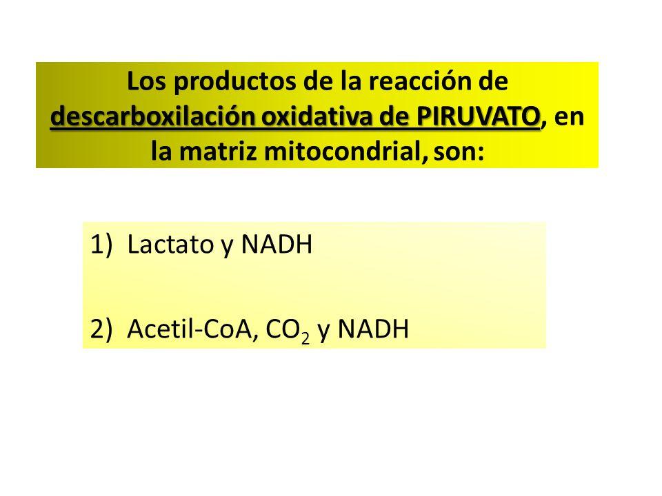 descarboxilación oxidativa de PIRUVATO Los productos de la reacción de descarboxilación oxidativa de PIRUVATO, en la matriz mitocondrial, son: 1)Lactato y NADH 2)Acetil-CoA, CO 2 y NADH