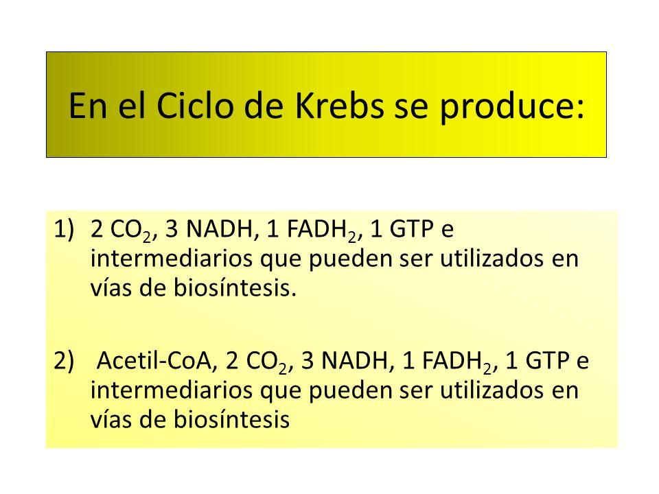 En el Ciclo de Krebs se produce: 1)2 CO 2, 3 NADH, 1 FADH 2, 1 GTP e intermediarios que pueden ser utilizados en vías de biosíntesis. 2) Acetil-CoA, 2