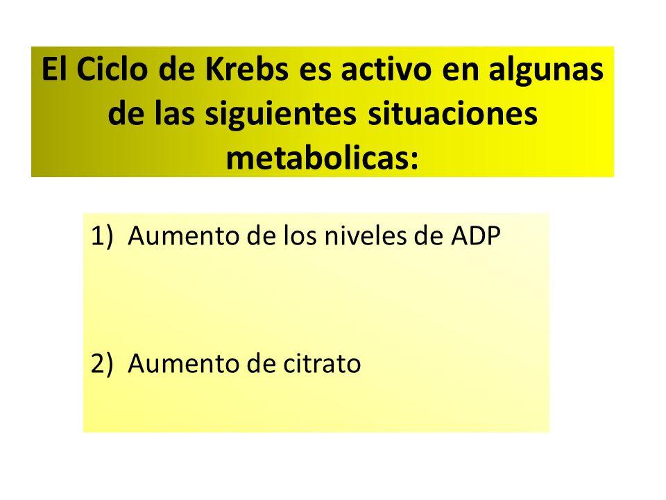 El Ciclo de Krebs es activo en algunas de las siguientes situaciones metabolicas: 1)Aumento de los niveles de ADP 2)Aumento de citrato