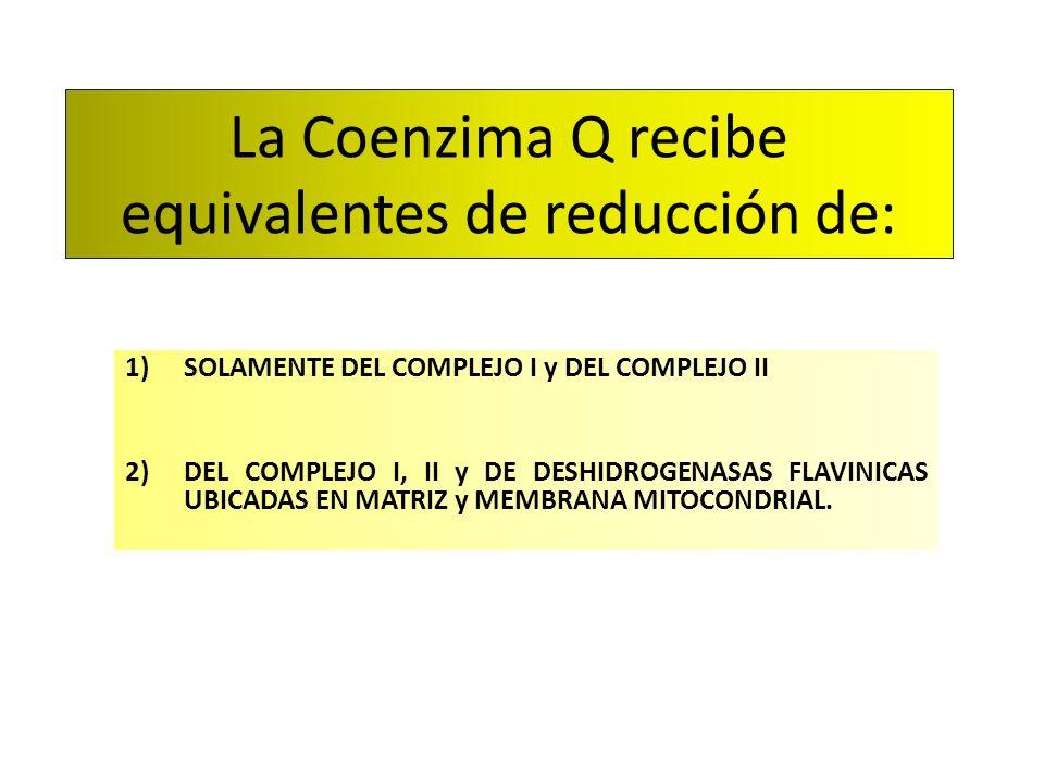La Coenzima Q recibe equivalentes de reducción de: 1)SOLAMENTE DEL COMPLEJO I y DEL COMPLEJO II 2)DEL COMPLEJO I, II y DE DESHIDROGENASAS FLAVINICAS U