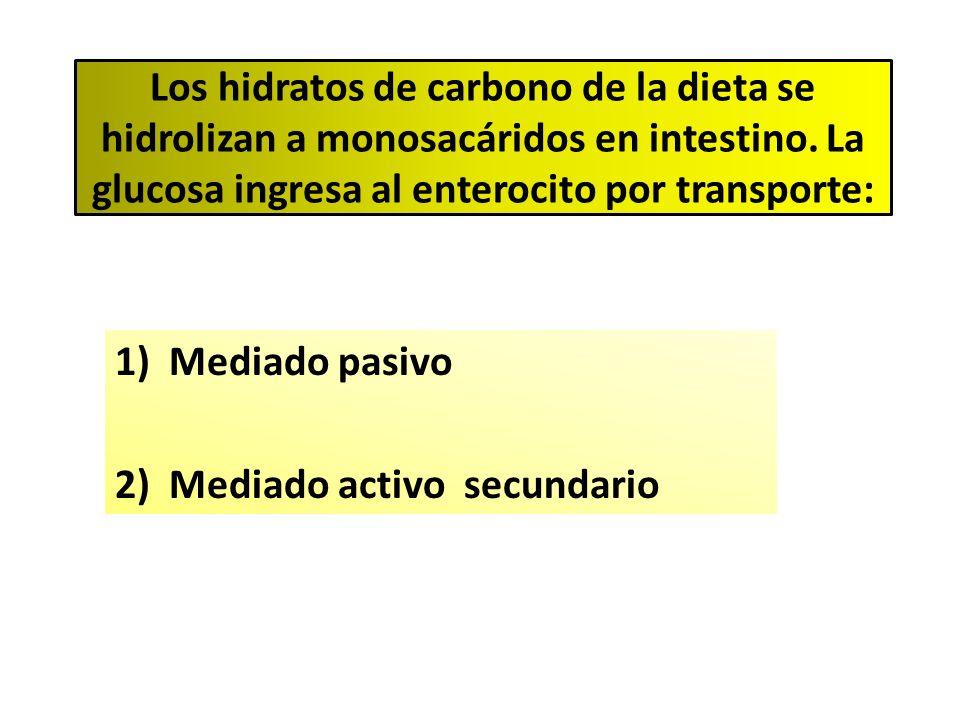 Los hidratos de carbono de la dieta se hidrolizan a monosacáridos en intestino. La glucosa ingresa al enterocito por transporte: 1)Mediado pasivo 2)Me