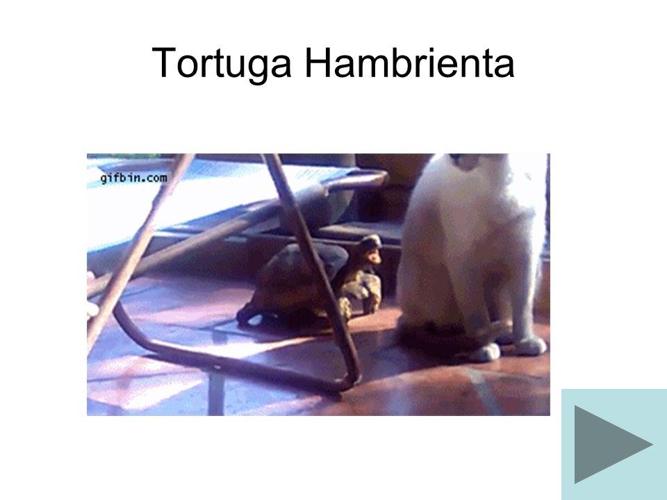 Tortuga Hambrienta