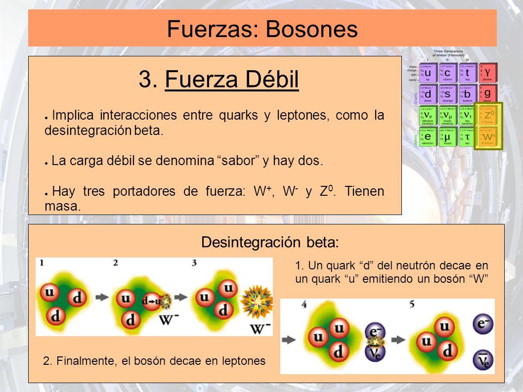 Fuerzas: Bosones 3. Fuerza Débil Implica interacciones entre quarks y leptones, como la desintegración beta. La carga débil se denomina sabor y hay do