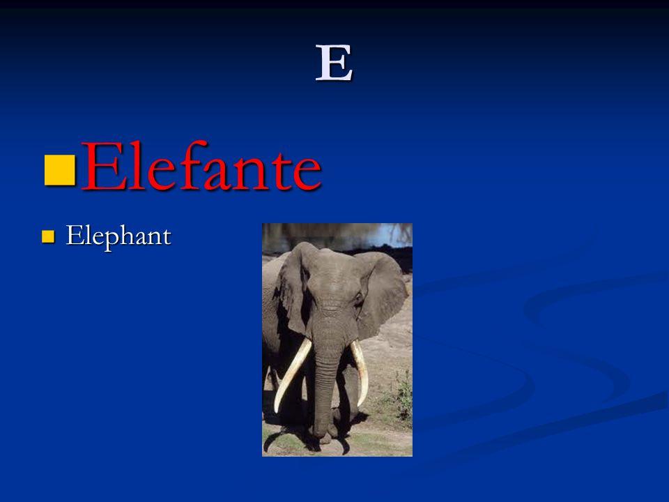 E Elefante Elefante Elephant Elephant