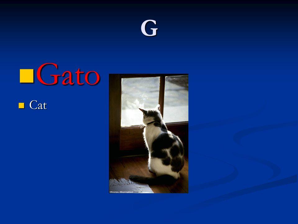 G Gato Gato Cat Cat