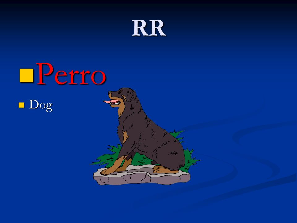 RR Perro Perro Dog Dog