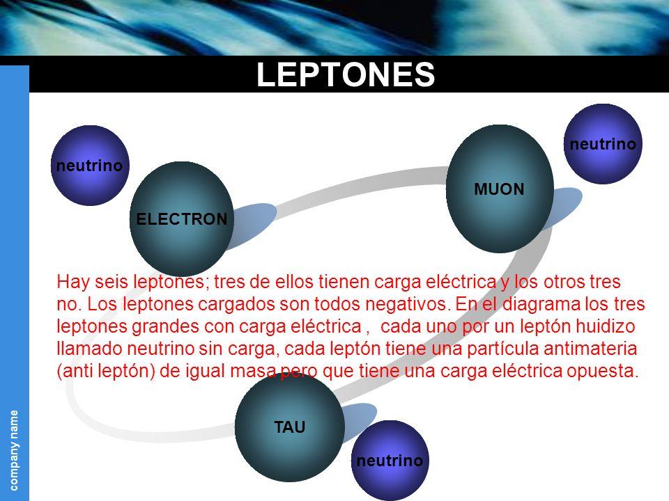 company name LEPTONES MUON neutrino Text ELECTRON TAU neutrino Hay seis leptones; tres de ellos tienen carga eléctrica y los otros tres no.
