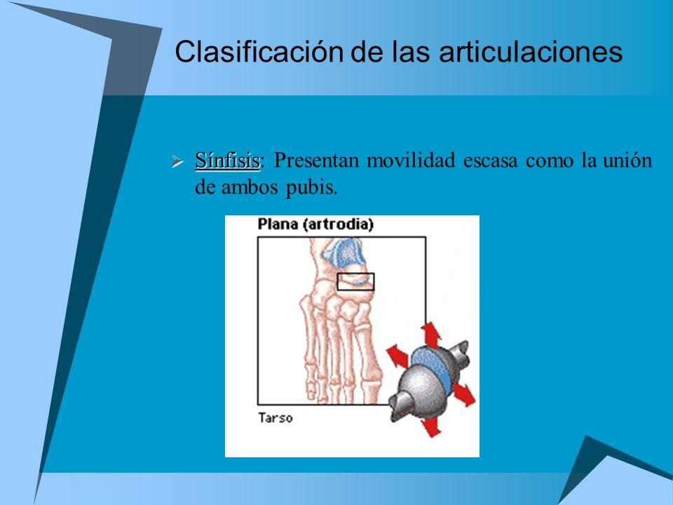 Clasificación de las articulaciones Sínfisis Sínfisis: Presentan movilidad escasa como la unión de ambos pubis.