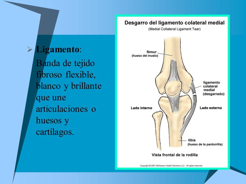 Ligamento: Banda de tejido fibroso flexible, blanco y brillante que une articulaciones o huesos y cartílagos.