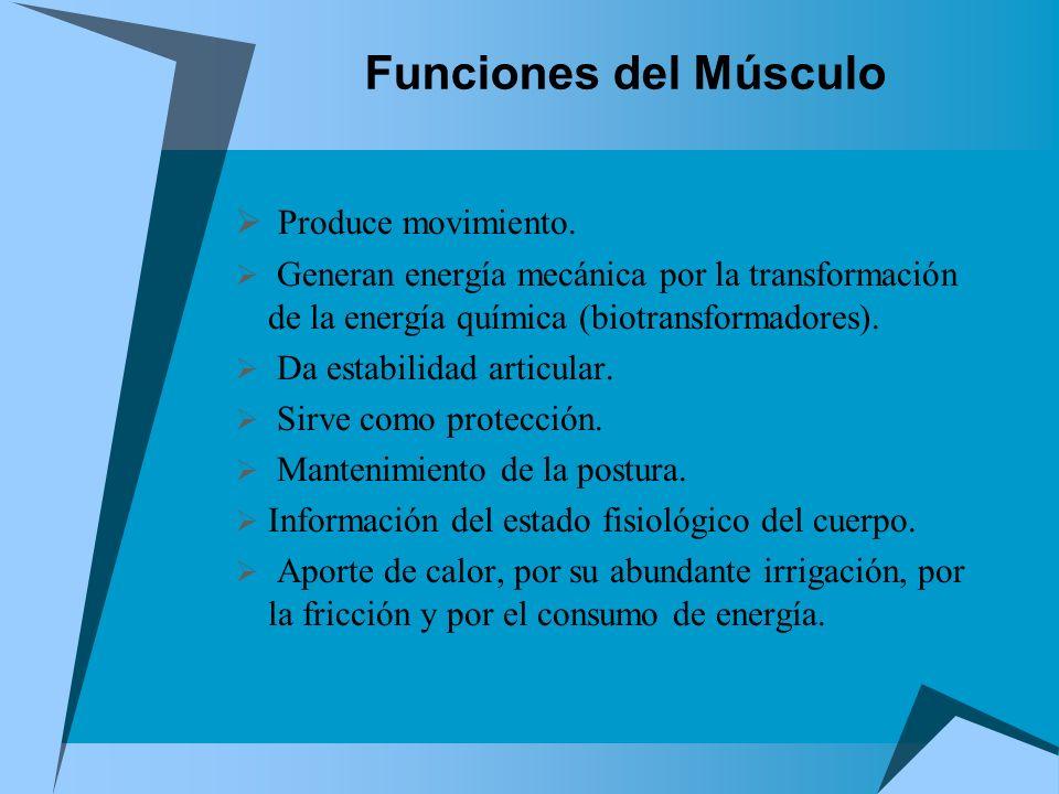 Funciones del Músculo Produce movimiento. Generan energía mecánica por la transformación de la energía química (biotransformadores). Da estabilidad ar