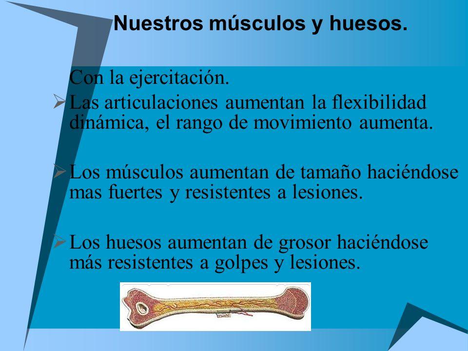 Nuestros músculos y huesos. Con la ejercitación. Las articulaciones aumentan la flexibilidad dinámica, el rango de movimiento aumenta. Los músculos au