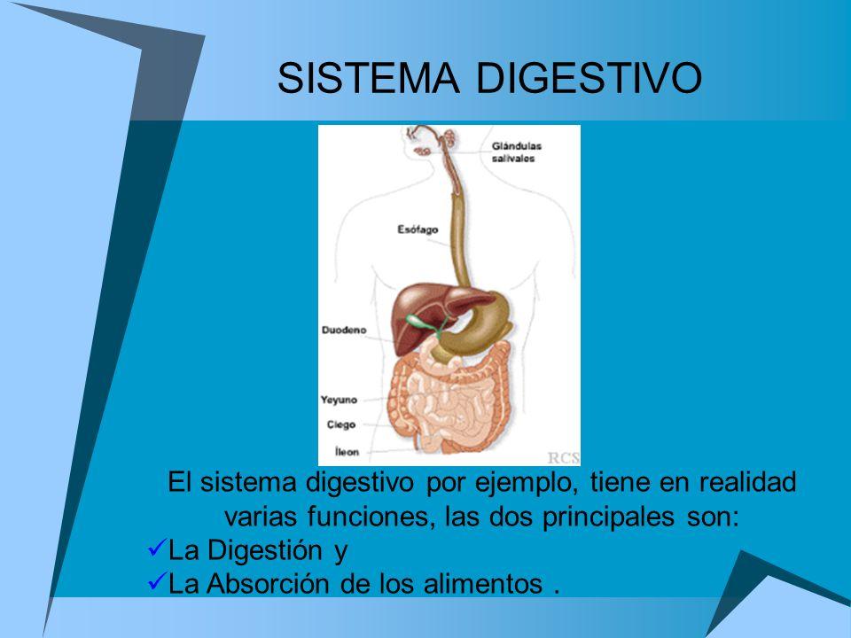 SISTEMA DIGESTIVO El sistema digestivo por ejemplo, tiene en realidad varias funciones, las dos principales son: La Digestión y La Absorción de los al