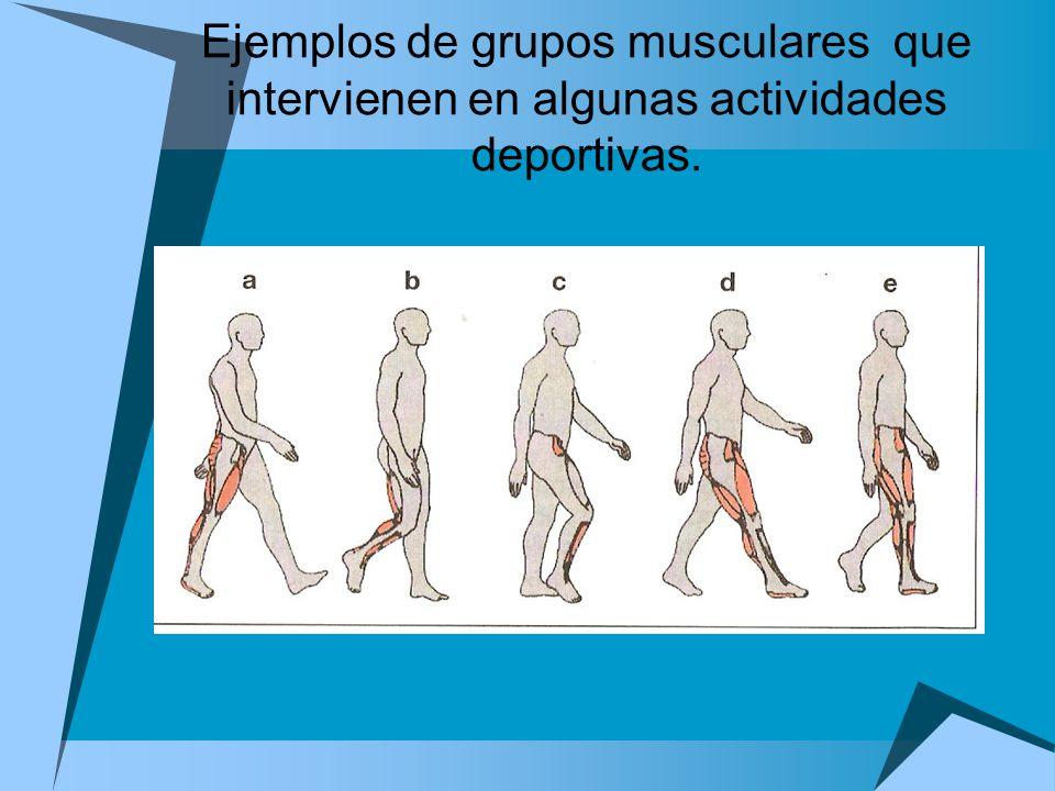 Ejemplos de grupos musculares que intervienen en algunas actividades deportivas.