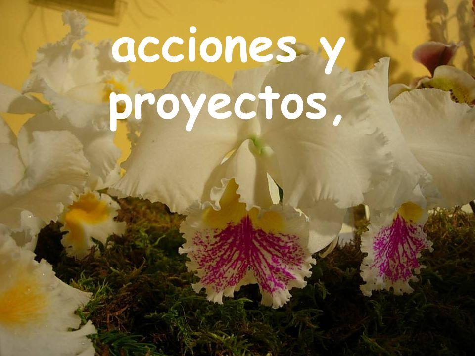 acciones y proyectos,