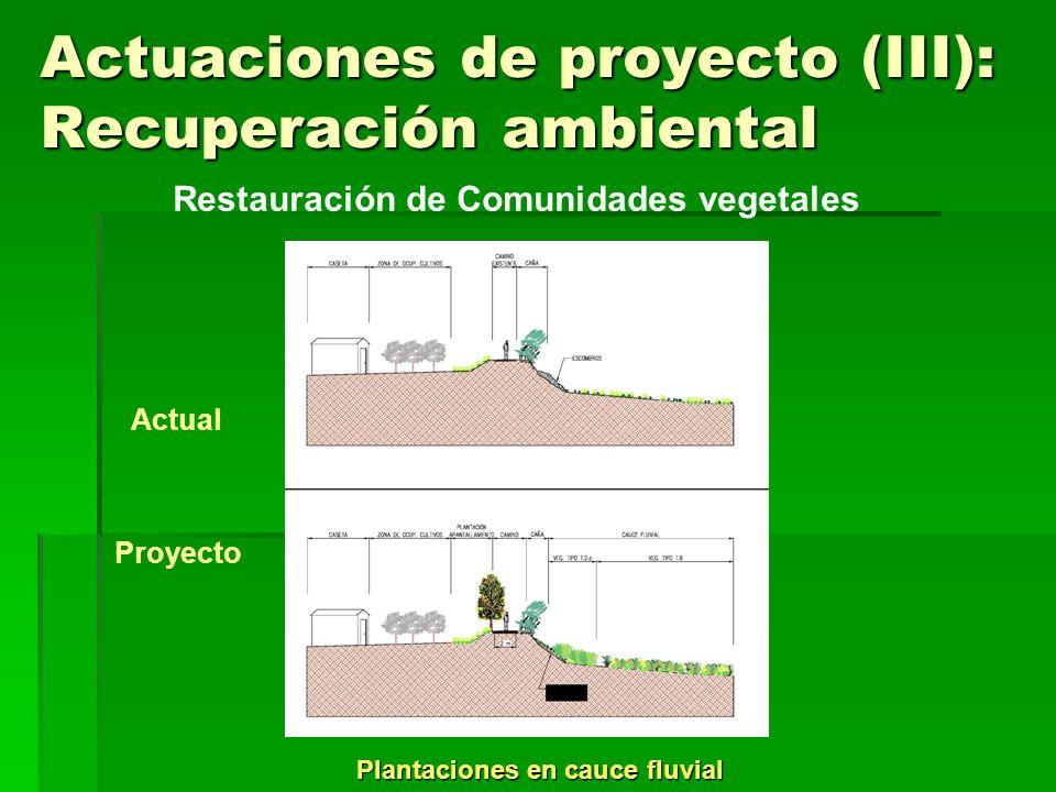 Actuaciones de proyecto (III): Recuperación ambiental Plantaciones en llanura aluvial degradada Restauración de Comunidades vegetales