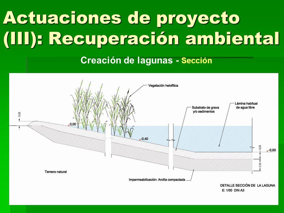 Actuaciones de proyecto (III): Recuperación ambiental Aumento de lámina de agua fluvial Encauzamiento efluente depuradora