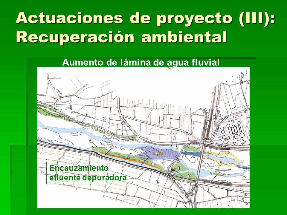 Actuaciones de proyecto (III): Recuperación ambiental Aumento de lámina de agua fluvial (rotura parcial de cordón) Actual Proyecto