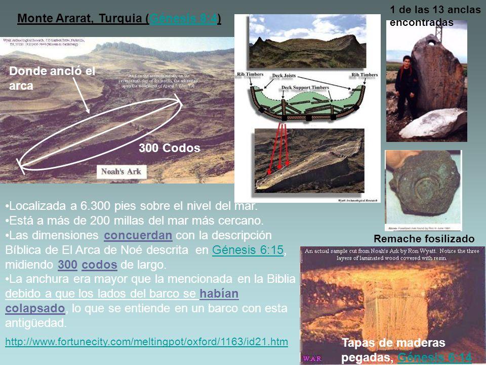 Tapas de maderas pegadas, Génesis 6:14Génesis 6:14 http://www.fortunecity.com/meltingpot/oxford/1163/id21.htm 300 Codos Monte Ararat, Turquia (Génesis