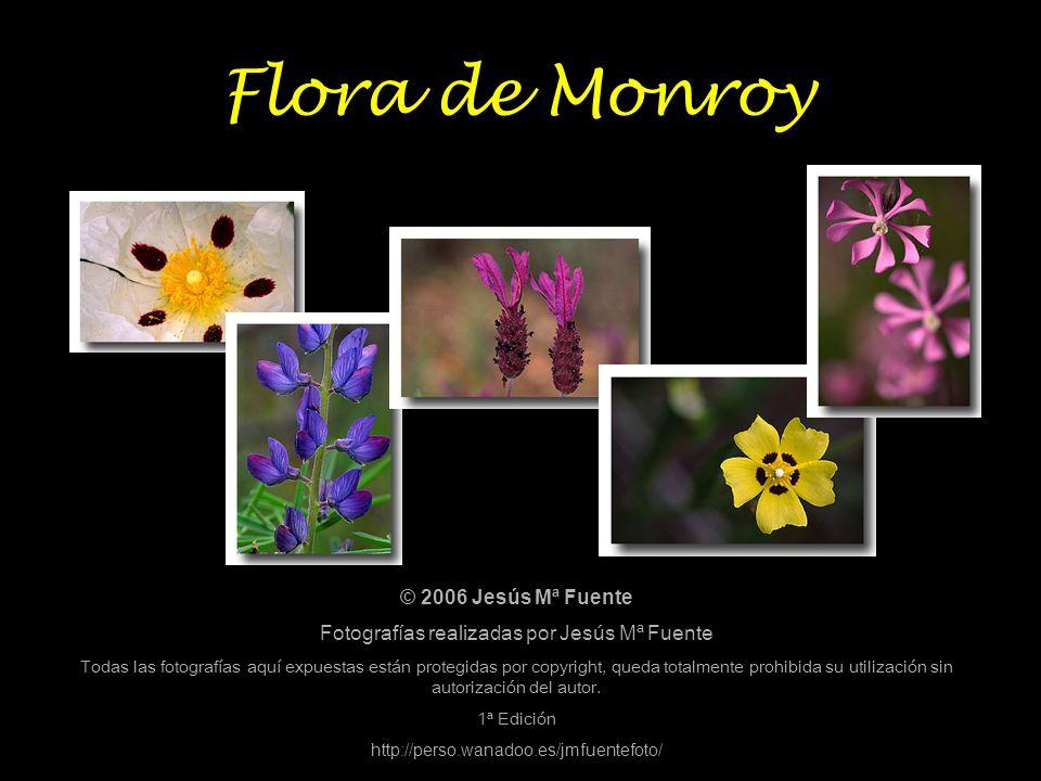 Flora de Monroy © 2006 Jesús Mª Fuente Fotografías realizadas por Jesús Mª Fuente Todas las fotografías aquí expuestas están protegidas por copyright,