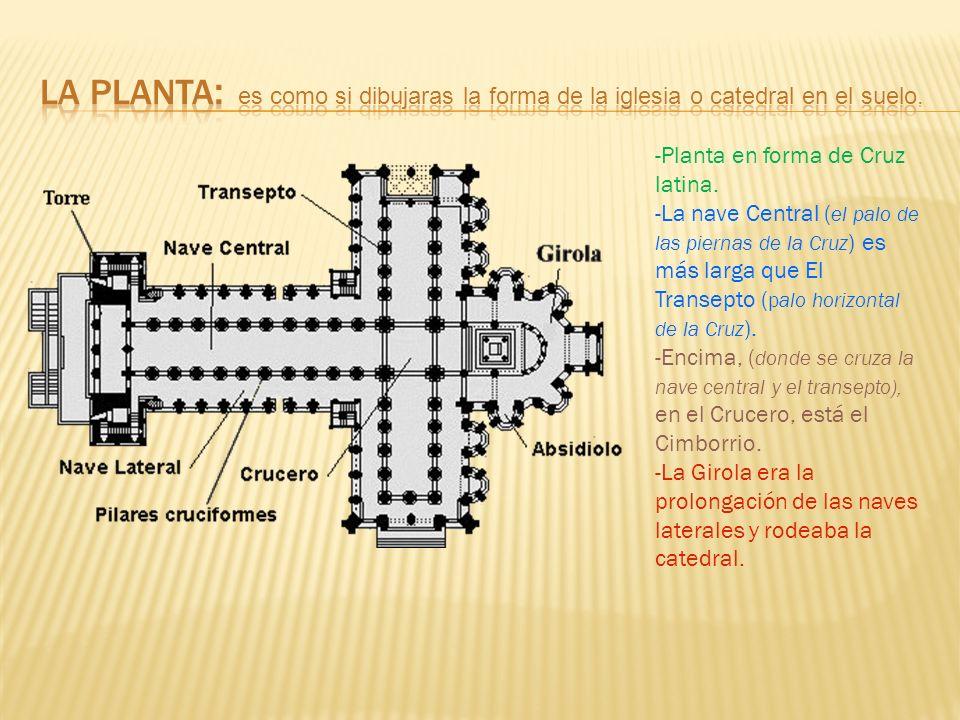 -Planta en forma de Cruz latina.