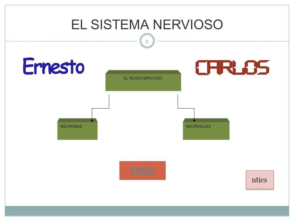 EL SISTEMA NERVIOSO 1 EL TEJIDO NERVIOSO NEURONASNEUROGLIAS VIDEO ntics
