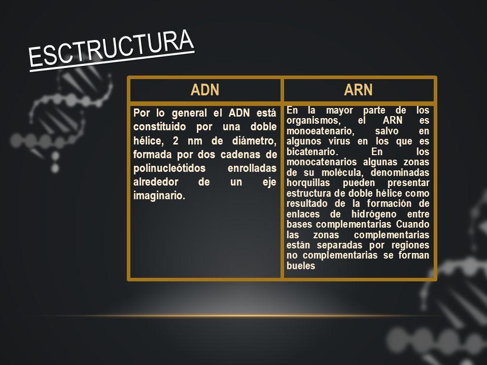 INTEGRANTES: EL ADN Y EL ARN c u a d r o c o m p a r a t i v o
