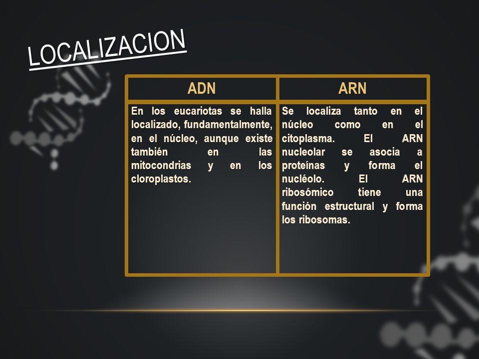 El ADN es el almacén de la información genética y la molécula encargada de transmitir a la descendencia las instrucciones necesarias para constituir t