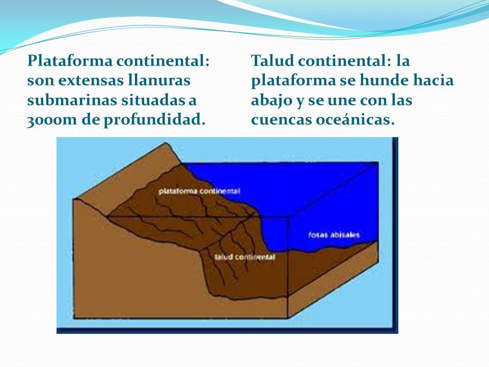 Plataforma continental: son extensas llanuras submarinas situadas a 3000m de profundidad. Talud continental: la plataforma se hunde hacia abajo y se u