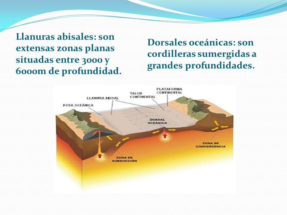 Llanuras abisales: son extensas zonas planas situadas entre 3000 y 6000m de profundidad. Dorsales oceánicas: son cordilleras sumergidas a grandes prof