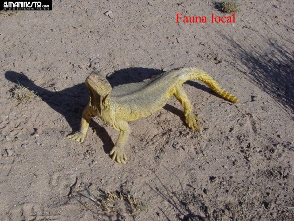 Fauna local