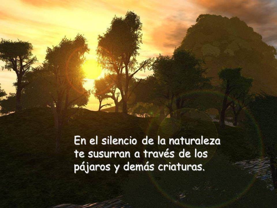 En el silencio de tu alma se esconden los más bellos secretos de tu corazón.