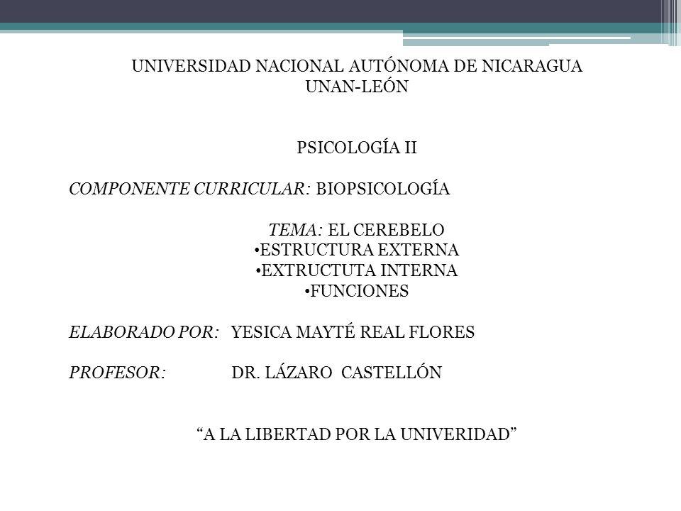 UNIVERSIDAD NACIONAL AUTÓNOMA DE NICARAGUA UNAN-LEÓN PSICOLOGÍA II COMPONENTE CURRICULAR: BIOPSICOLOGÍA TEMA: EL CEREBELO ESTRUCTURA EXTERNA EXTRUCTUT