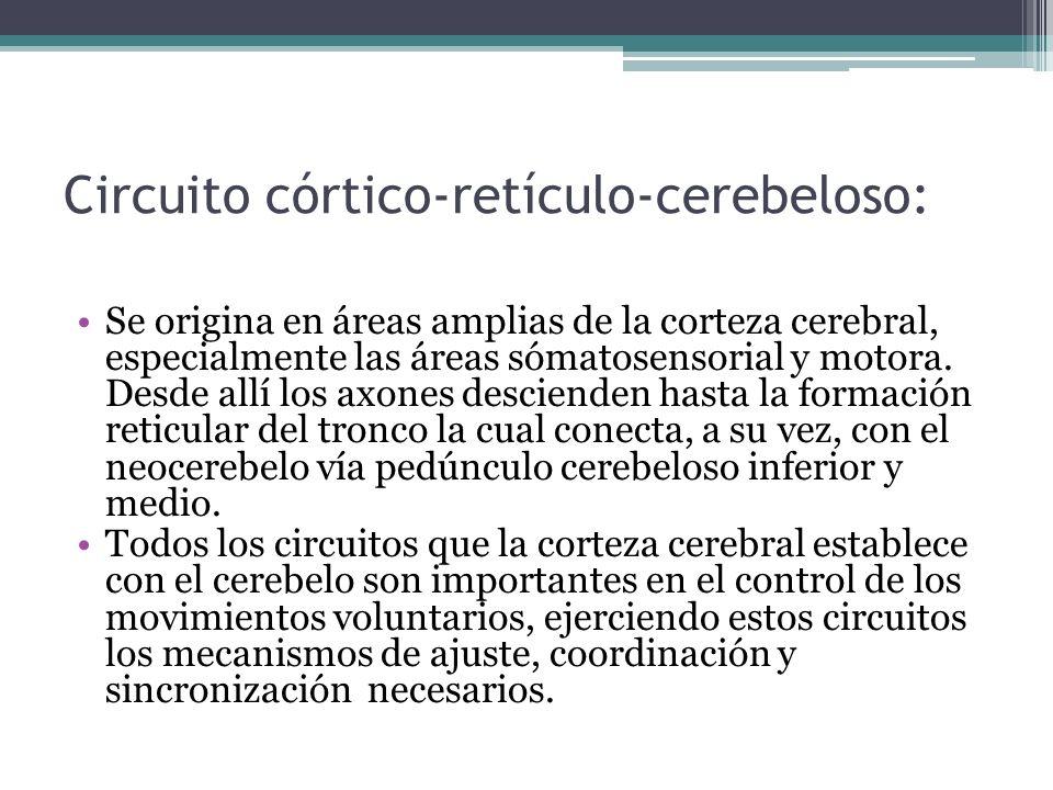 Circuito córtico-retículo-cerebeloso: Se origina en áreas amplias de la corteza cerebral, especialmente las áreas sómatosensorial y motora. Desde allí