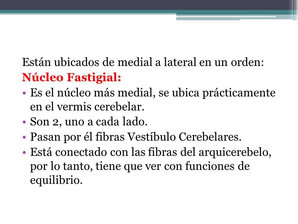 Están ubicados de medial a lateral en un orden: Núcleo Fastigial: Es el núcleo más medial, se ubica prácticamente en el vermis cerebelar. Son 2, uno a
