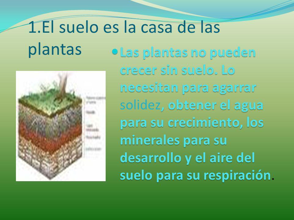 1.El suelo es la casa de las plantas Las plantas no pueden crecer sin suelo. Lo necesitan para agarrar, obtener el agua para su crecimiento, los miner