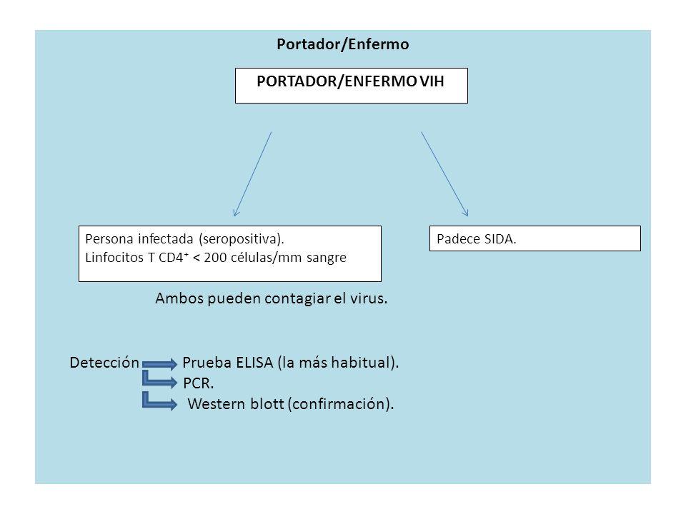 Portador/Enfermo Persona infectada (seropositiva). Linfocitos T CD4 < 200 células/mm sangre Padece SIDA. PORTADOR/ENFERMO VIH Ambos pueden contagiar e